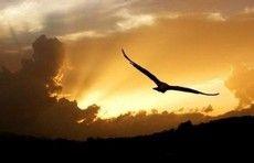 Viro uma ave e bato minhas asas para bem longe.