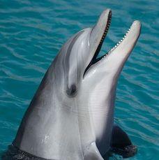En delfin