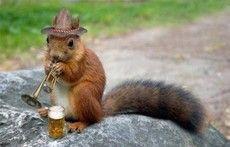 Squirrelix