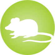 Frequently in new environments (travel, competition, etc.) and/or exposed to allergens like dust, mold and mice on a regular basis