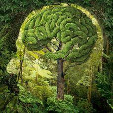 Nature & Ecosytem