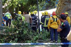 Queda da árvore na Madeira em cerimónia religiosa
