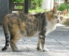 Hemlösa katters dag