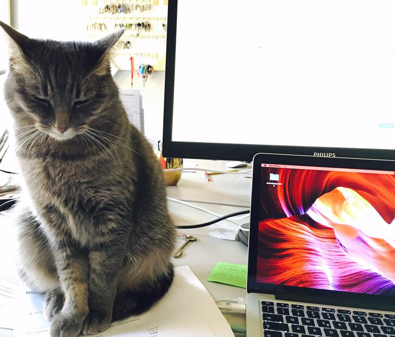"Picture for choice ""Gigia The cat-secretary"""
