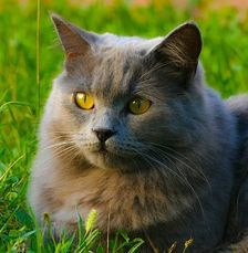 Katter utan koppel