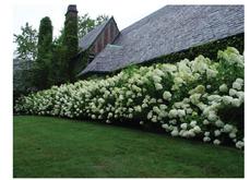 Option 2: Flowering Hedge
