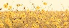 My Dear Yellow World