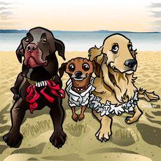 Three pets