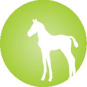 Foal, Weanling or Yearling