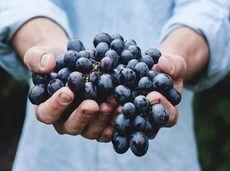 Dégustation Vins Fins & Produits Locaux