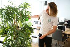 Plantes & entretien