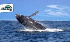 Avistamiento de ballenas y fauna 2018