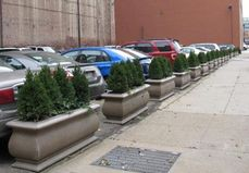 Planters or Trees