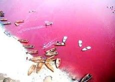 Floating in a pink lake