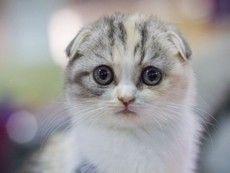 Viro um gatinho indefeso, pedindo colo.